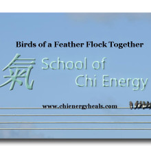 Chi Energy and Birds of a Feather Wisdom